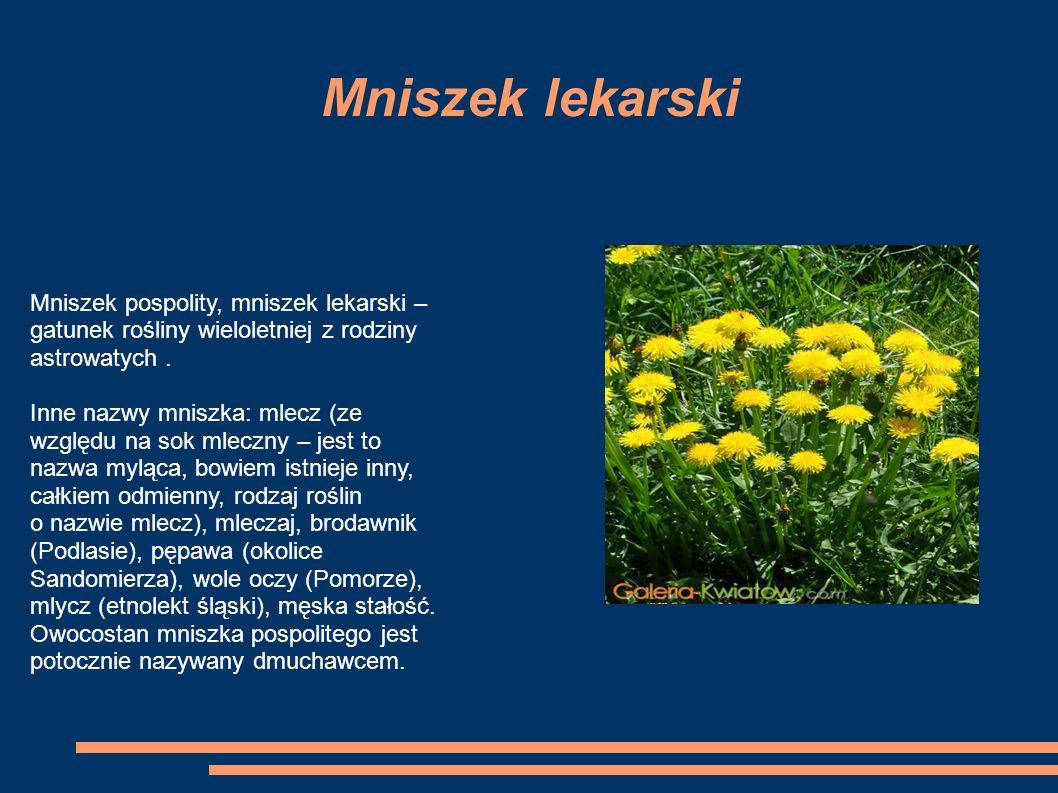 Mniszek lekarski Mniszek pospolity, mniszek lekarski – gatunek rośliny wieloletniej z rodziny astrowatych.