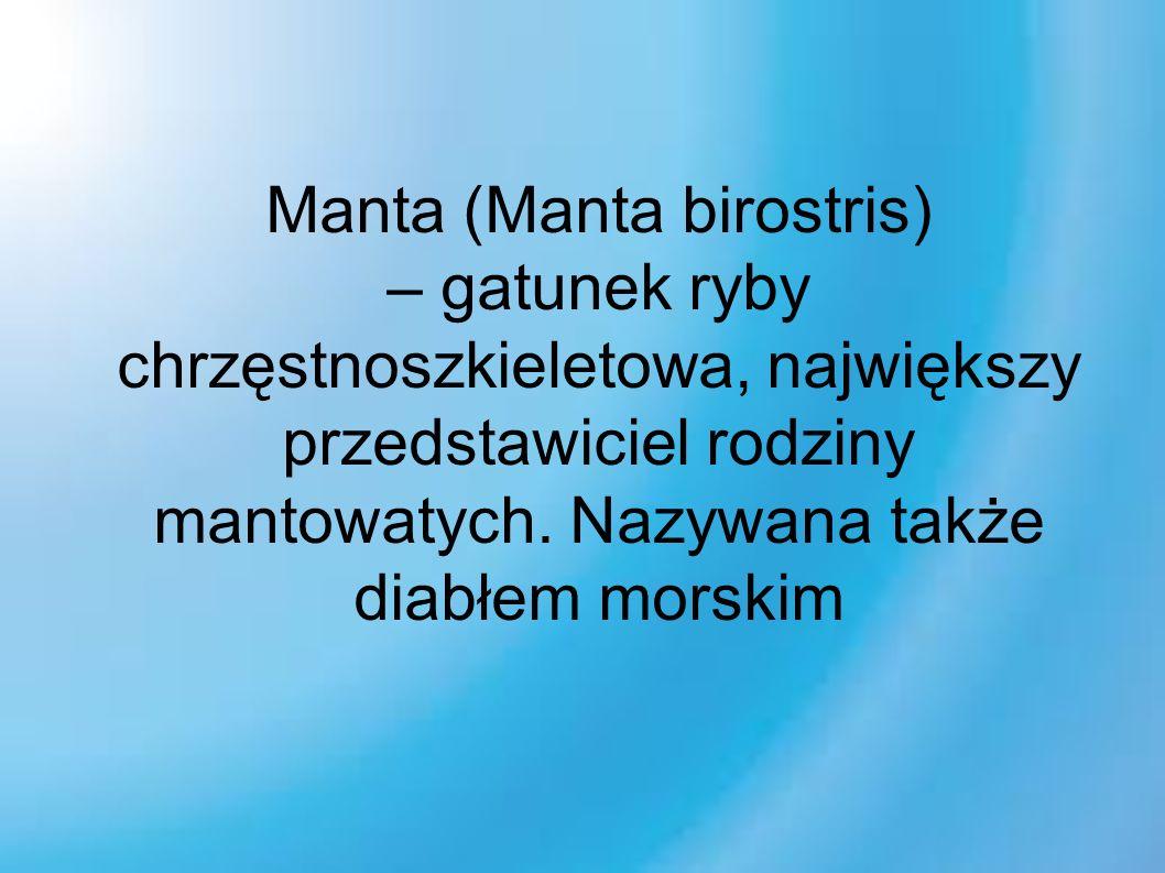 Manta (Manta birostris) – gatunek ryby chrzęstnoszkieletowa, największy przedstawiciel rodziny mantowatych.