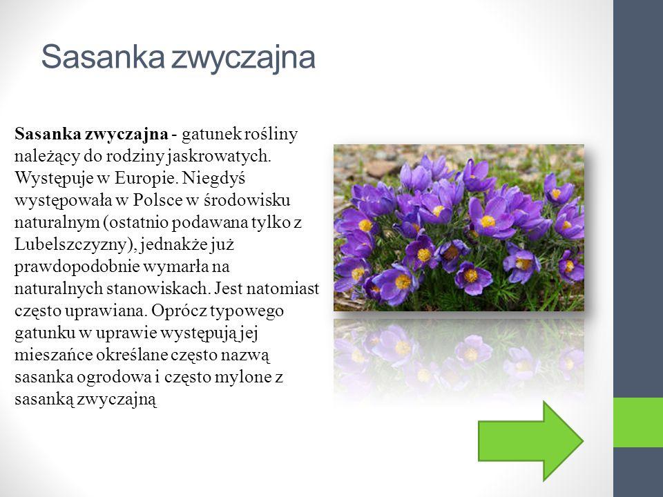 Przylaszczka Przylaszczka – rodzaj roślin z rodziny jaskrowatych. W Polsce występuje tylko 1 gatunek – przylaszczka pospolita Hepatica nobilis, zaraze