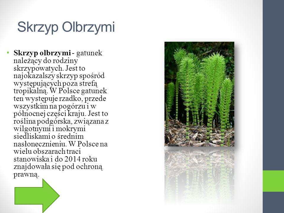 Sasanka zwyczajna Sasanka zwyczajna - gatunek rośliny należący do rodziny jaskrowatych. Występuje w Europie. Niegdyś występowała w Polsce w środowisku
