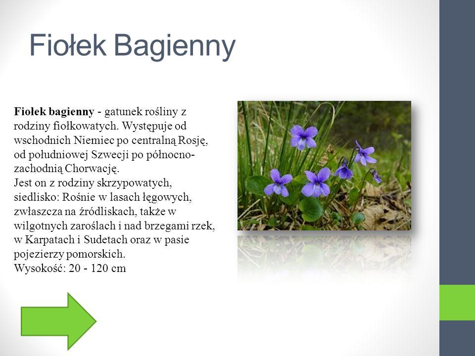 Wielosił błękitny Wielosił błękitny - gatunek rośliny należący do rodziny wielosiłowatych.