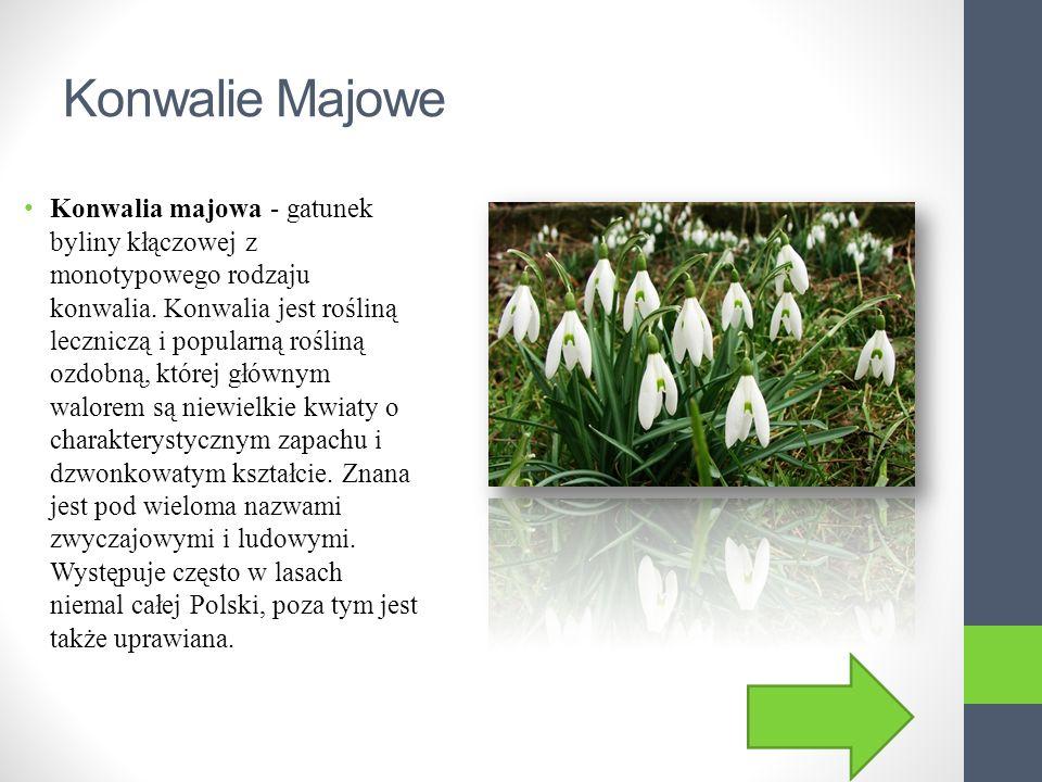 Wyjaśnienie Rośliny pod ochroną, są chronione przed wyginięciem gatunku.