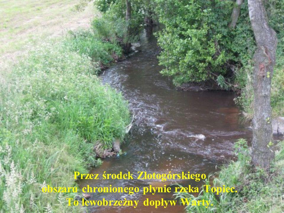 Przez środek Złotogórskiego obszaru chronionego płynie rzeka Topiec. To lewobrzeżny dopływ Warty.