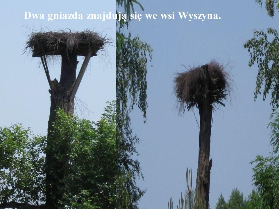 Dwa gniazda znajdują się we wsi Wyszyna.