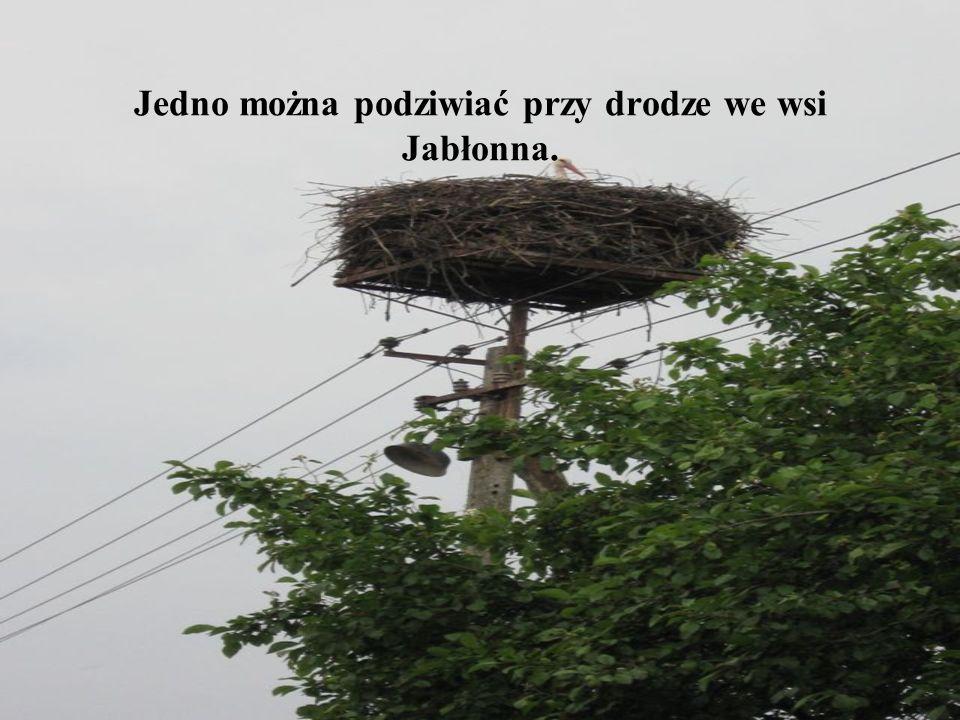 Jedno można podziwiać przy drodze we wsi Jabłonna.