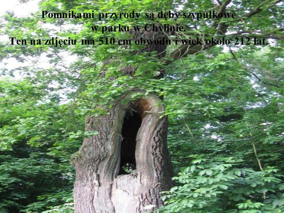 Pomnikami przyrody są dęby szypułkowe w parku w Chylinie.