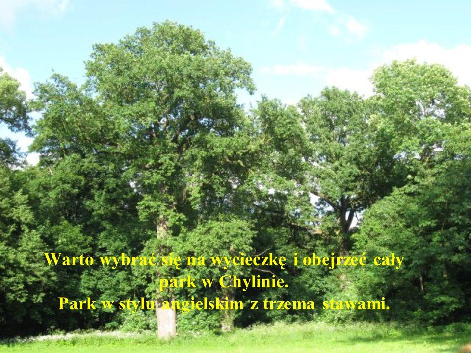 Warto wybrać się na wycieczkę i obejrzeć cały park w Chylinie.