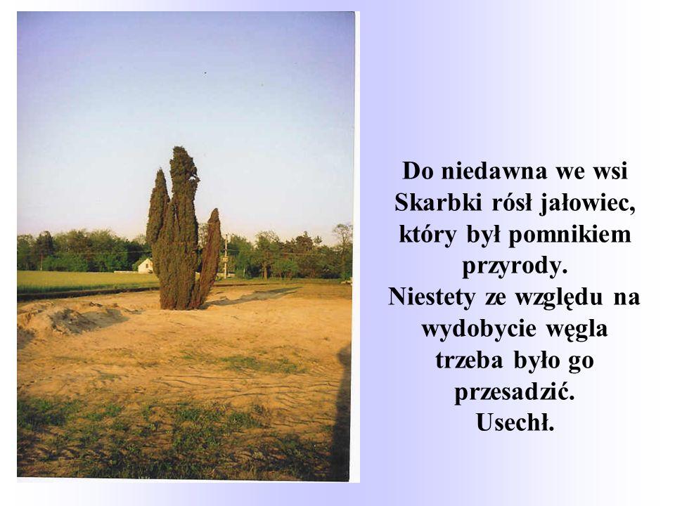 Do niedawna we wsi Skarbki rósł jałowiec, który był pomnikiem przyrody.