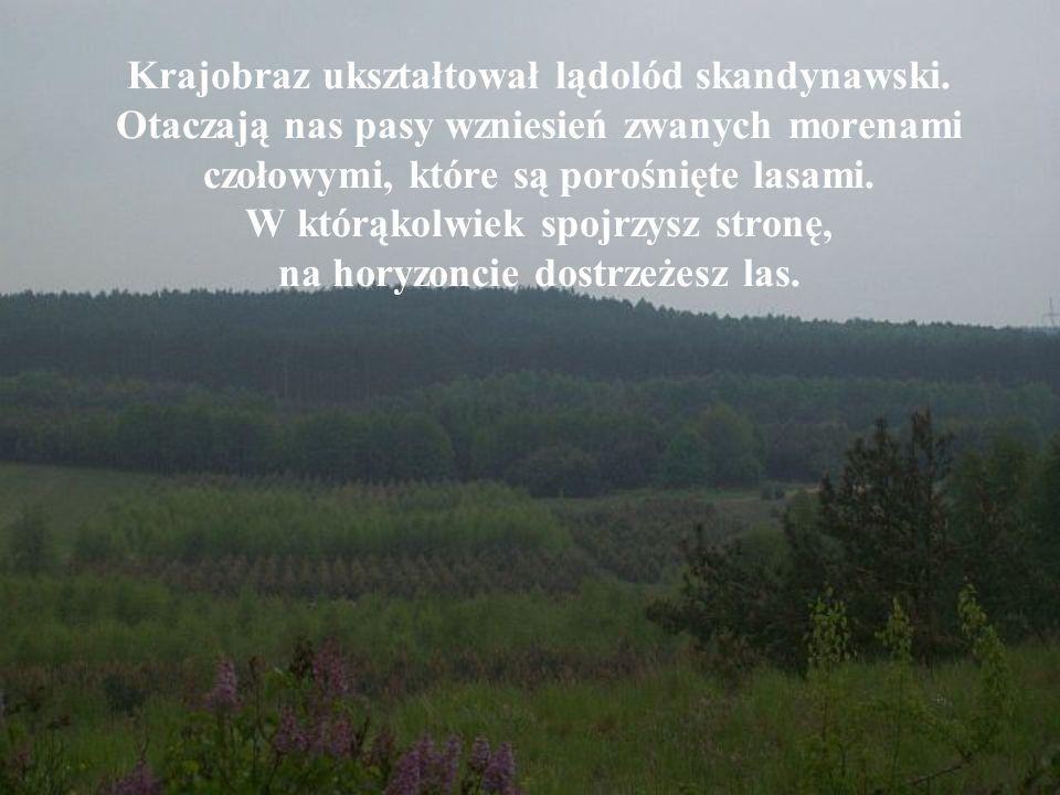 Krajobraz ukształtował lądolód skandynawski.