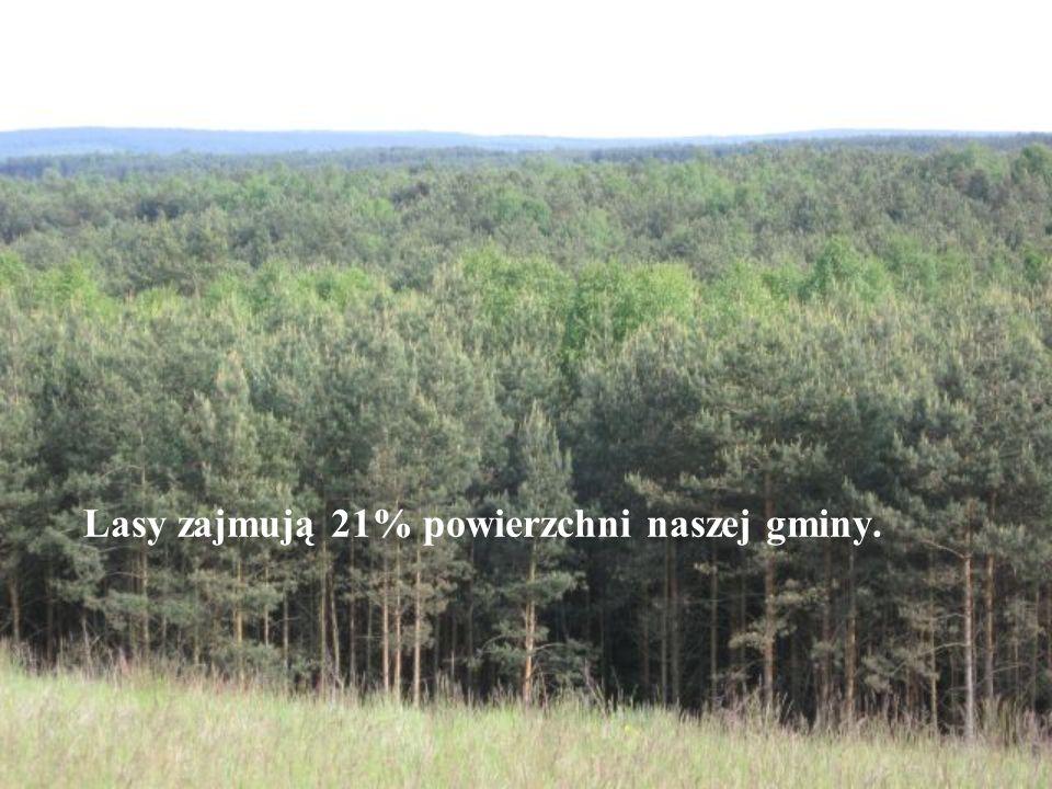 Lasy zajmują 21% powierzchni naszej gminy.