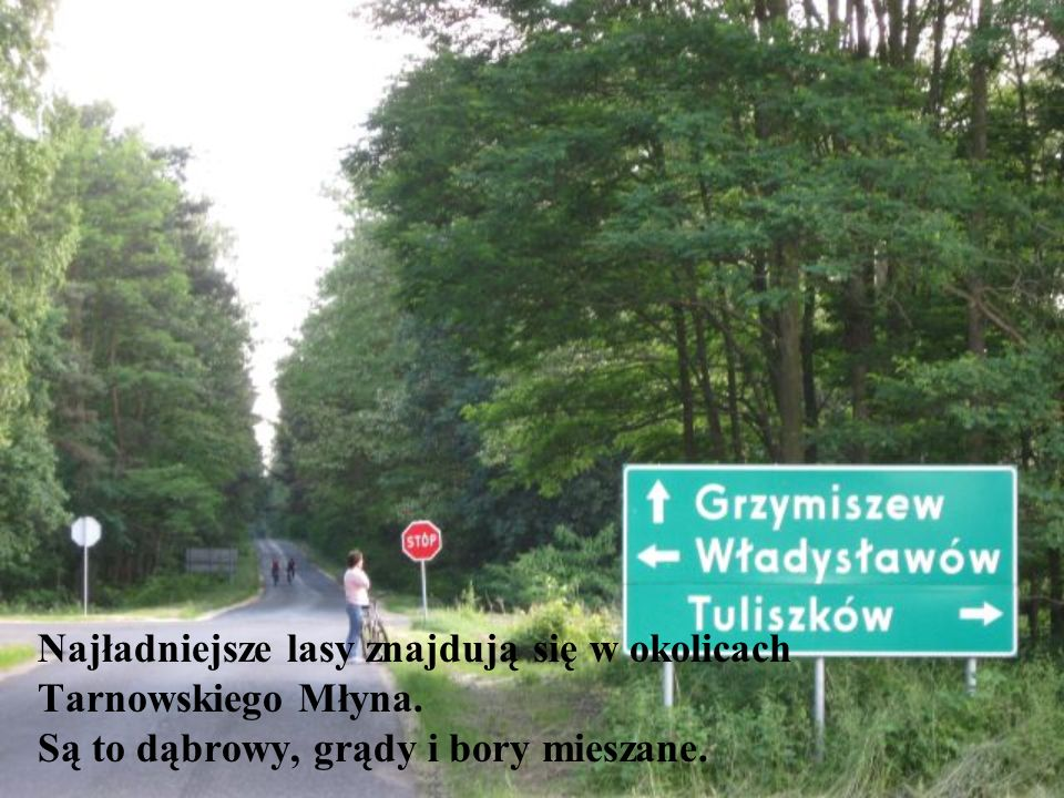 Najładniejsze lasy znajdują się w okolicach Tarnowskiego Młyna.