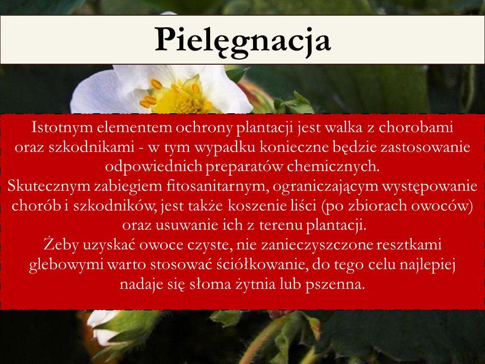 6/25/11 Istotnym elementem ochrony plantacji jest walka z chorobami oraz szkodnikami - w tym wypadku konieczne będzie zastosowanie odpowiednich prepar