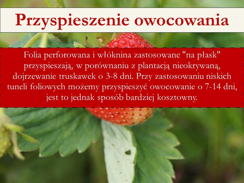 6/25/11 Folia perforowana i włóknina zastosowane na płask przyspieszają, w porównaniu z plantacją nieokrywaną, dojrzewanie truskawek o 3-8 dni.