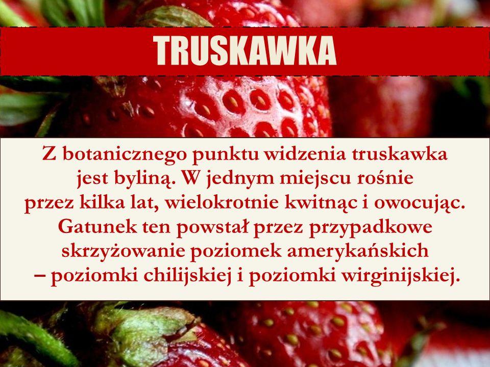 6/25/11 TRUSKAWKA Z botanicznego punktu widzenia truskawka jest byliną. W jednym miejscu rośnie przez kilka lat, wielokrotnie kwitnąc i owocując. Gatu