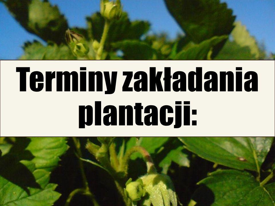 6/25/11 Terminy zakładania plantacji: