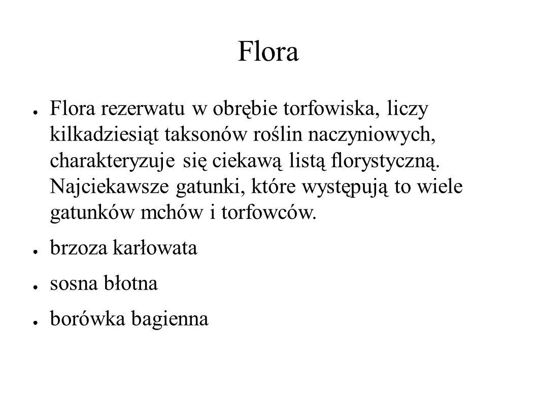 Flora ● Flora rezerwatu w obrębie torfowiska, liczy kilkadziesiąt taksonów roślin naczyniowych, charakteryzuje się ciekawą listą florystyczną.