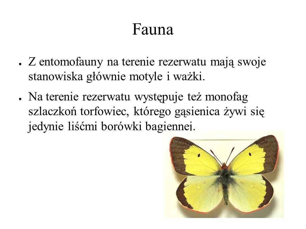 Fauna ● Z entomofauny na terenie rezerwatu mają swoje stanowiska głównie motyle i ważki.