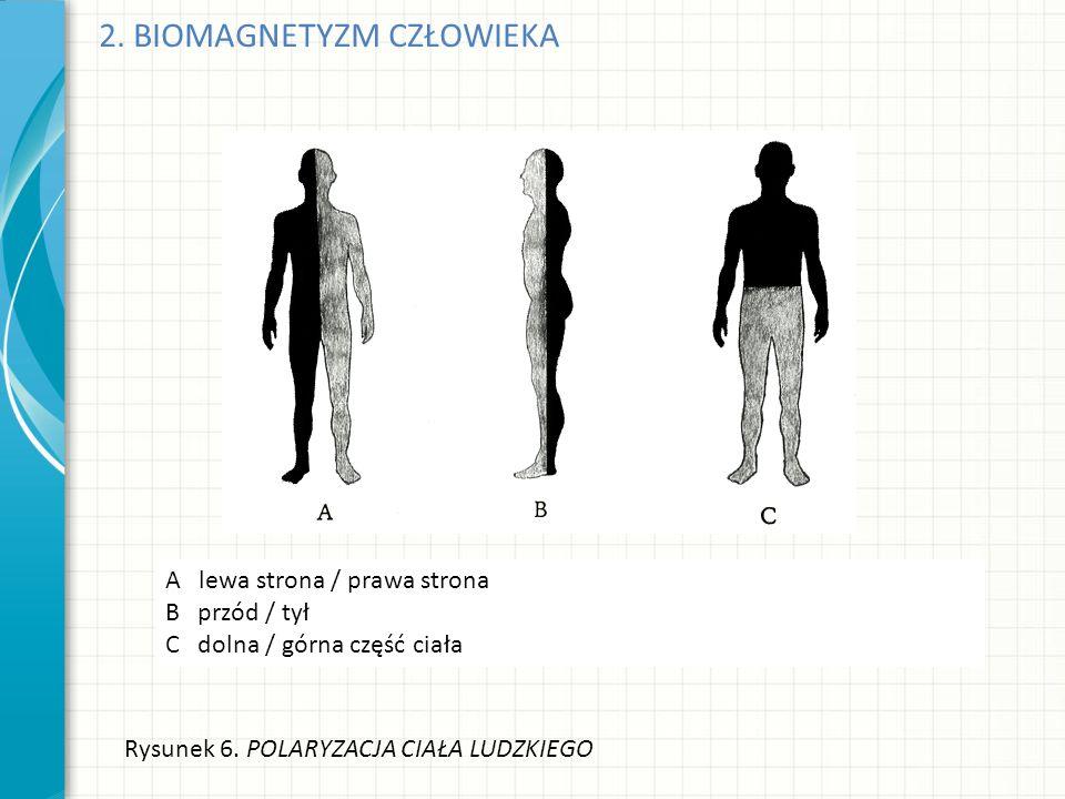 2. BIOMAGNETYZM CZŁOWIEKA Rysunek 6. POLARYZACJA CIAŁA LUDZKIEGO A lewa strona / prawa strona B przód / tył C dolna / górna część ciała