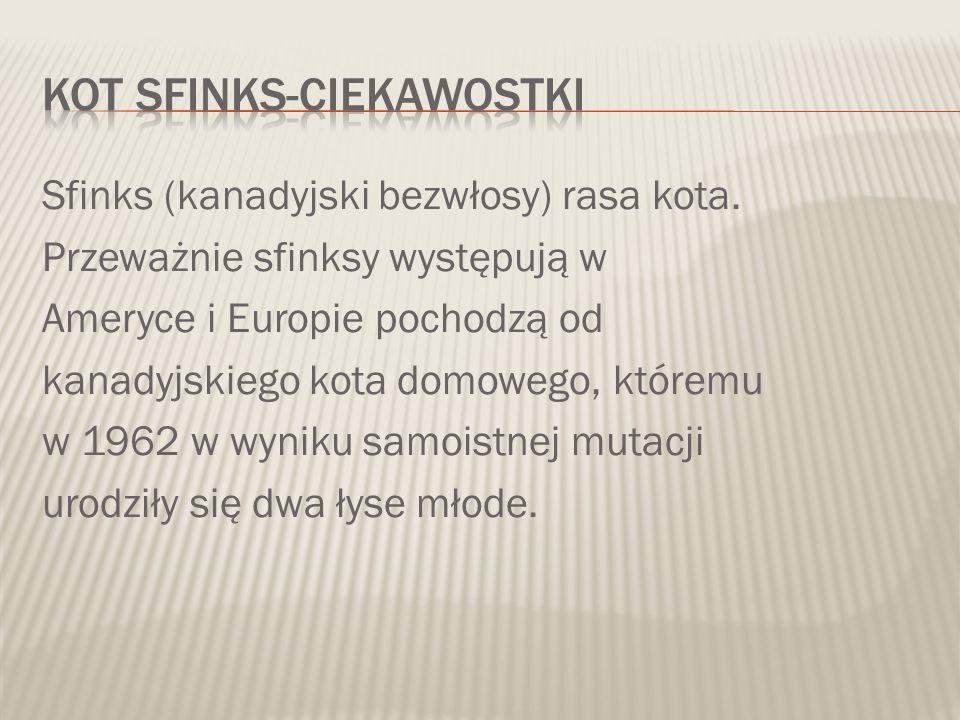 Sfinks (kanadyjski bezwłosy) rasa kota. Przeważnie sfinksy występują w Ameryce i Europie pochodzą od kanadyjskiego kota domowego, któremu w 1962 w wyn