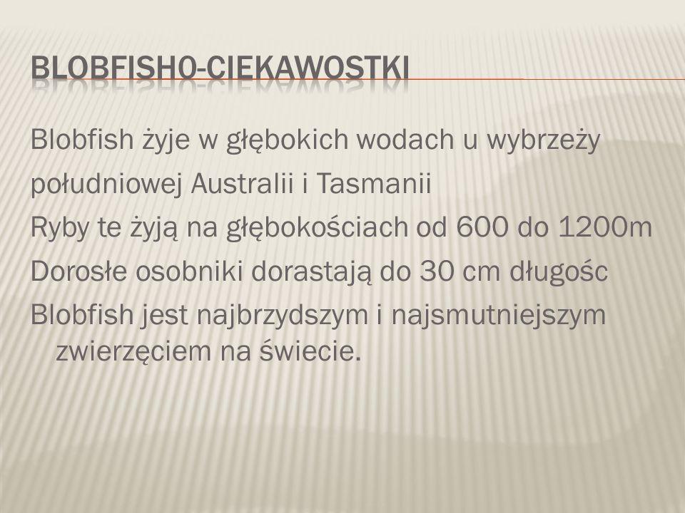 Blobfish żyje w głębokich wodach u wybrzeży południowej Australii i Tasmanii Ryby te żyją na głębokościach od 600 do 1200m Dorosłe osobniki dorastają do 30 cm długośc Blobfish jest najbrzydszym i najsmutniejszym zwierzęciem na świecie.