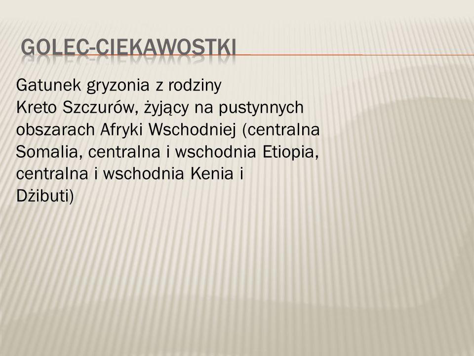 Gatunek gryzonia z rodziny Kreto Szczurów, żyjący na pustynnych obszarach Afryki Wschodniej (centralna Somalia, centralna i wschodnia Etiopia, centralna i wschodnia Kenia i Dżibuti)