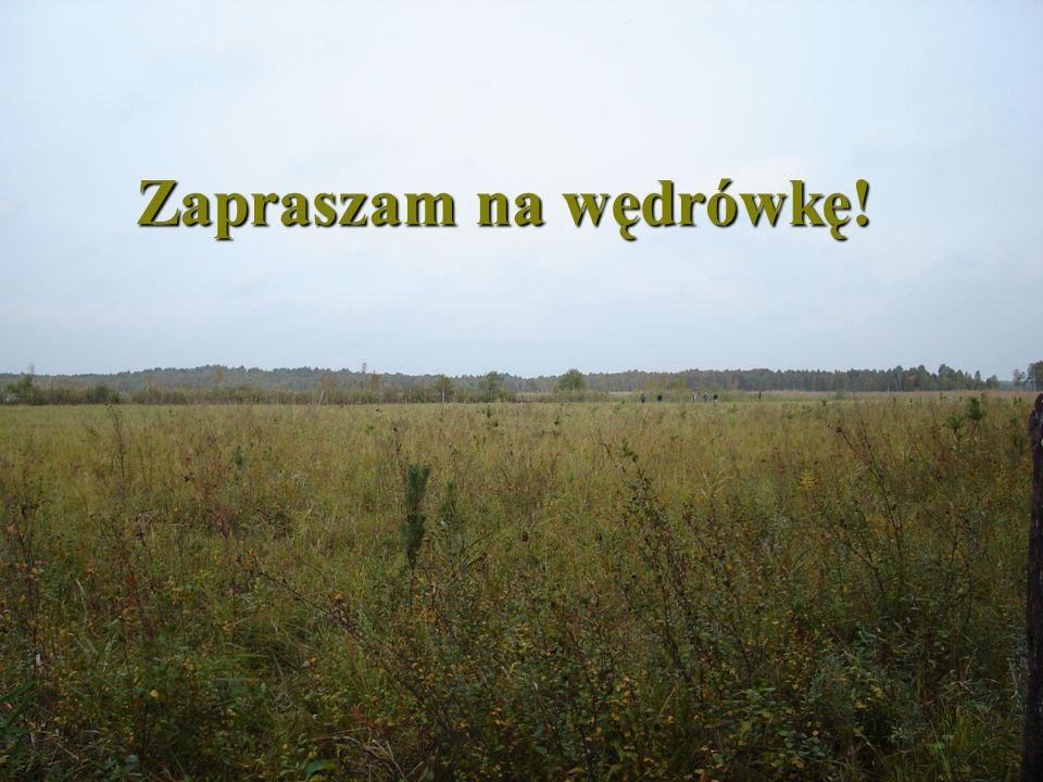 """Zosin Najdalej wysunięty na wschód kraniec Polski Przejście graniczne z Ukrainą W okolicach Zosina (dokładnie w miejscowości Łuszków) znajdziemy użytek ekologiczny """"Kacapka - naturalne jeziorko śródpolne, które podobno ma dwa dna."""