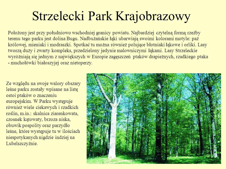 Nieopodal Kryłowa znajduje się źródełko mające opinię cudownego i figura św.