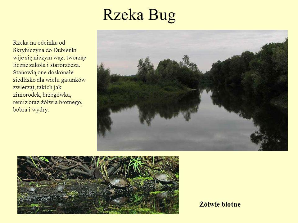 """Rezerwat """"Liski  Rezerwat jest ostoją dla chronionych i rzadko spotykanych gatunków roślin."""