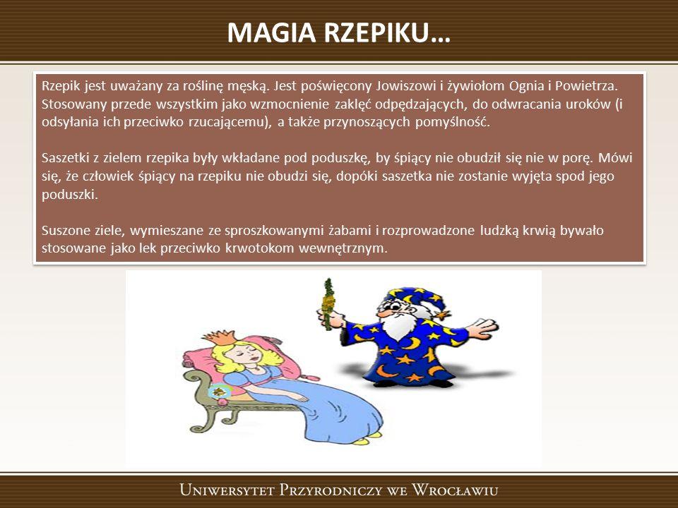 MAGIA RZEPIKU… Rzepik jest uważany za roślinę męską.