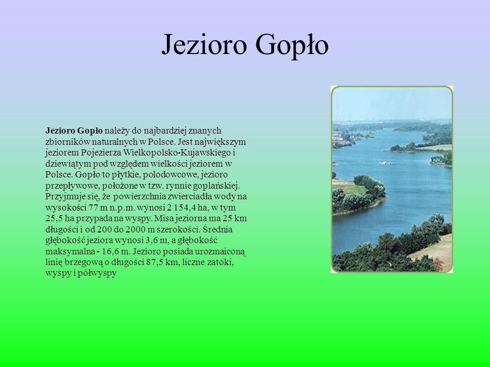 Jezioro Gopło Jezioro Gopło należy do najbardziej znanych zbiorników naturalnych w Polsce.