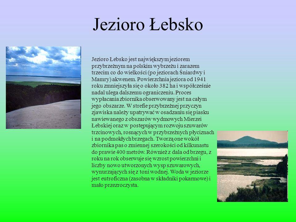 Jezioro Łebsko Jezioro Łebsko jest największym jeziorem przybrzeżnym na polskim wybrzeżu i zarazem trzecim co do wielkości (po jeziorach Śniardwy i Mamry) akwenem.