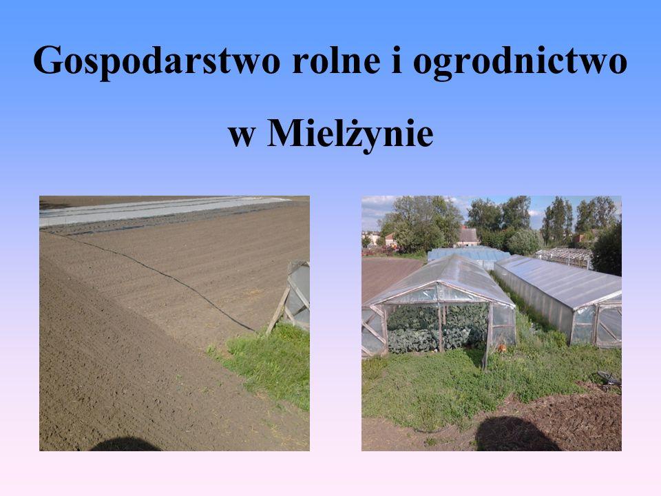 Gospodarstwo rolne i ogrodnictwo w Mielżynie