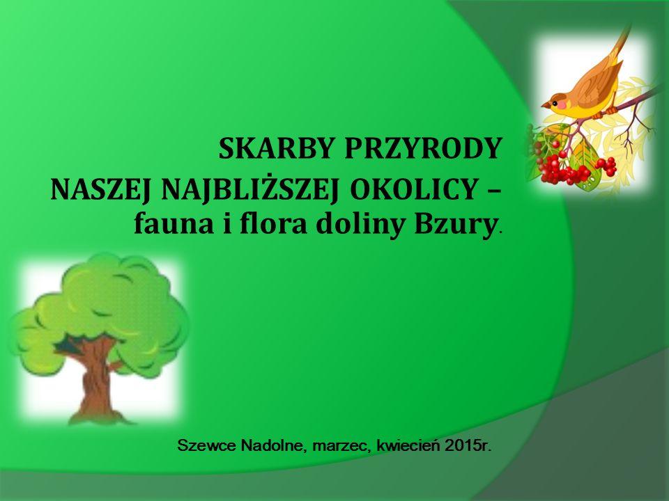 SKARBY PRZYRODY NASZEJ NAJBLIŻSZEJ OKOLICY – fauna i flora doliny Bzury.
