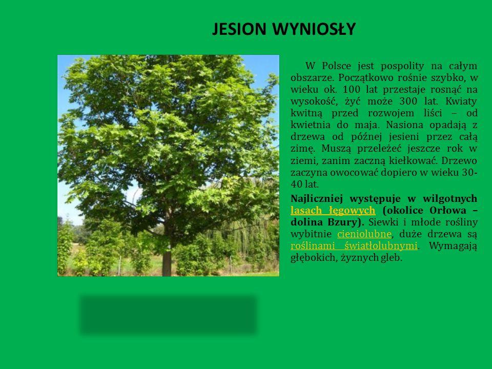 JESION WYNIOSŁY W Polsce jest pospolity na całym obszarze.