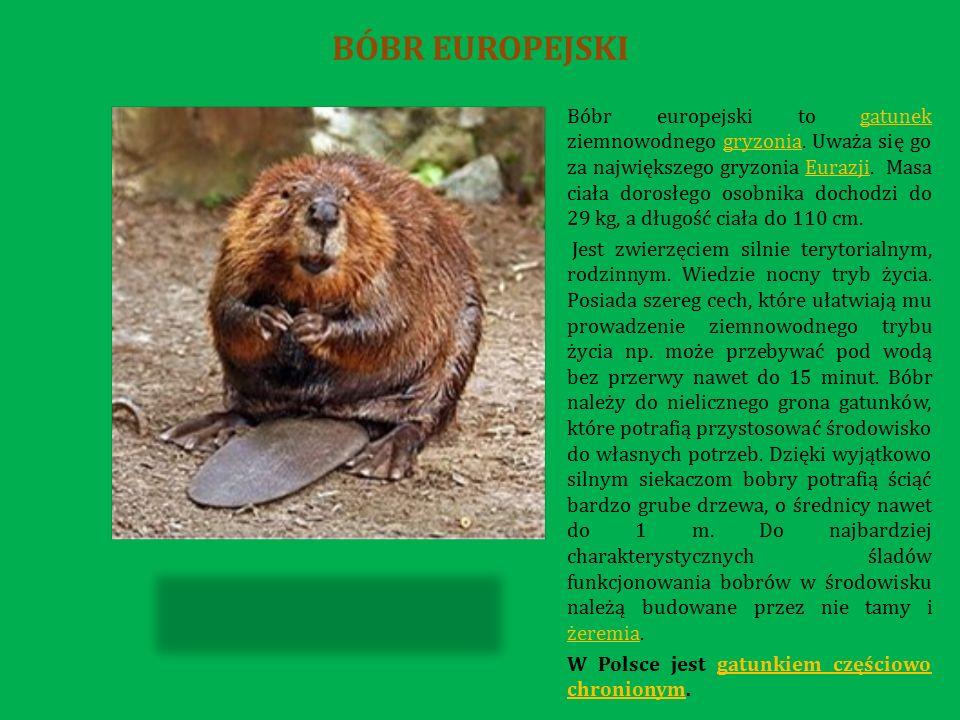 Długość jej ciała wynosi ok.30-100 cm.Waży 5-12 kg.