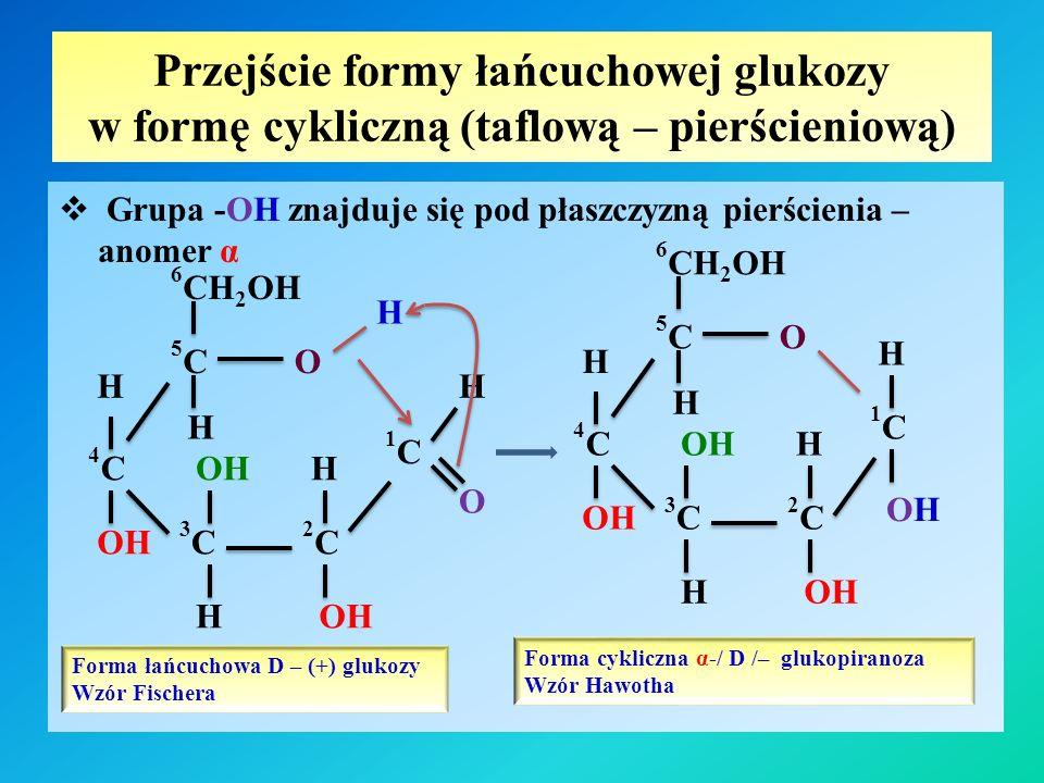 Przejście formy łańcuchowej glukozy w formę cykliczną (taflową – pierścieniową)  Grupa -OH znajduje się pod płaszczyzną pierścienia – anomer α Forma łańcuchowa D – (+) glukozy Wzór Fischera H 1C1C O H H H 6 CH 2 OH 5C5C 4C4C 3C3C 2C2C OH O H H Forma cykliczna α-/ D /– glukopiranoza Wzór Hawotha 1C1C O H H H 6 CH 2 OH 5C5C 4C4C 3C3C 2C2C OH OHOH H H