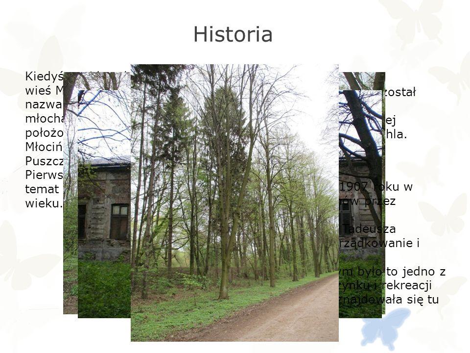 Flora Na terenie lasu występuje 18 gatunków drzew.