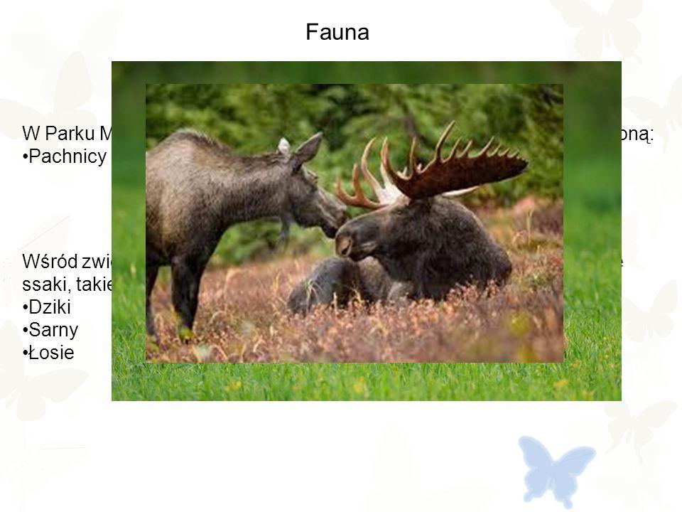 Fauna W Parku Młocińskim stwierdzono występowanie owada pod ścisłą ochroną: Pachnicy dębowej Wśród zwierząt można tu spotkać liczne ptaki np.: bażanty, ale też duże ssaki, takie jak: Dziki Sarny Łosie