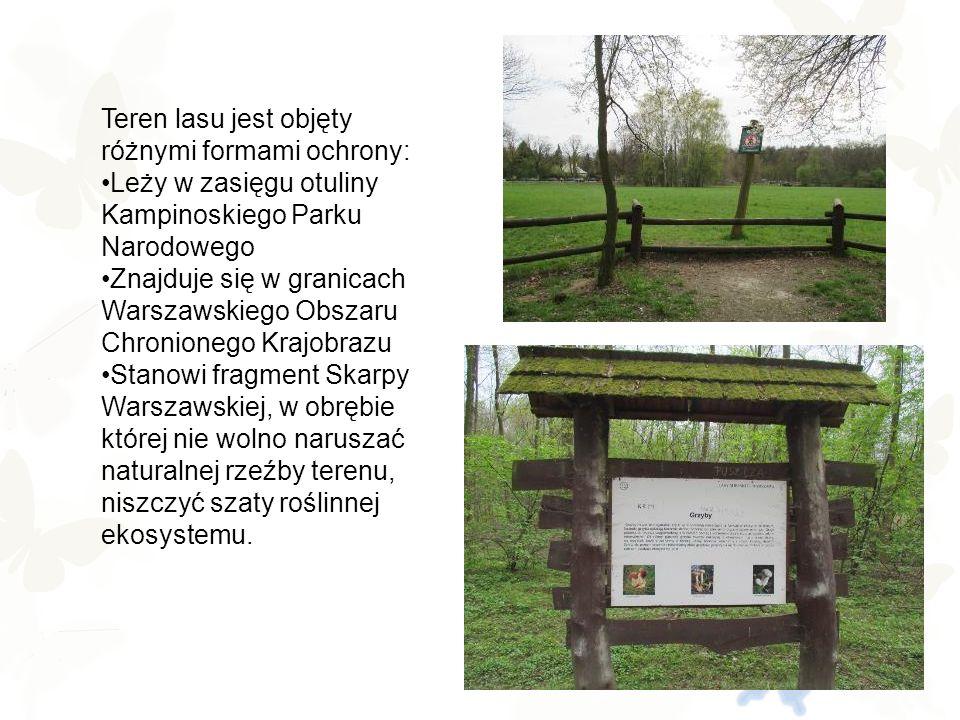 Nasze Nadleśnictwo Las Młociny uznawany jest za jeden z najistotniejszych elementów systemu przyrodniczego Warszawy.