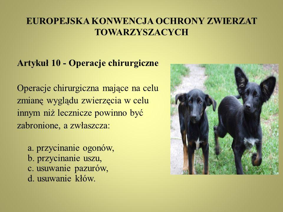EUROPEJSKA KONWENCJA OCHRONY ZWIERZAT TOWARZYSZACYCH Artykuł 10 - Operacje chirurgiczne Operacje chirurgiczna mające na celu zmianę wyglądu zwierzęcia w celu innym niż lecznicze powinno być zabronione, a zwłaszcza: a.