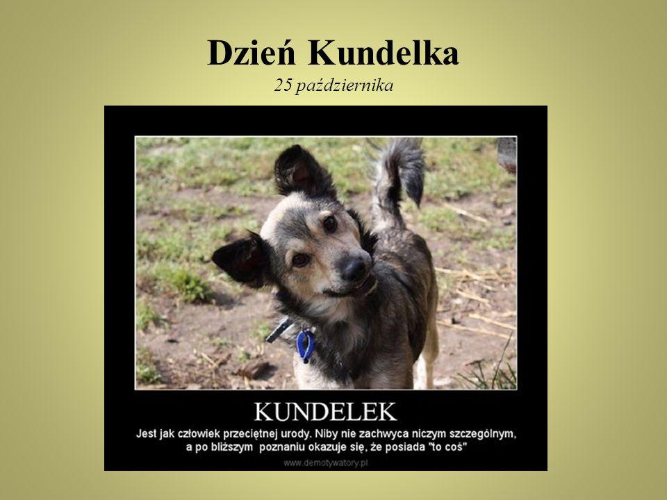 Dzień Kundelka polskie święto kundelka, czyli wszystkich wielorasowych psów.