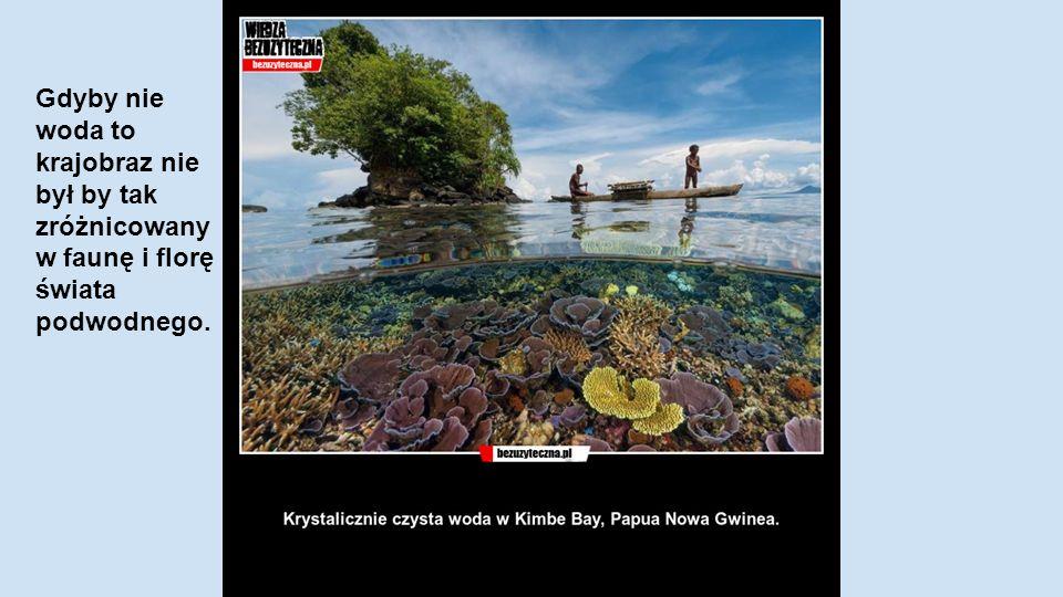 Gdyby nie woda to krajobraz nie był by tak zróżnicowany w faunę i florę świata podwodnego.