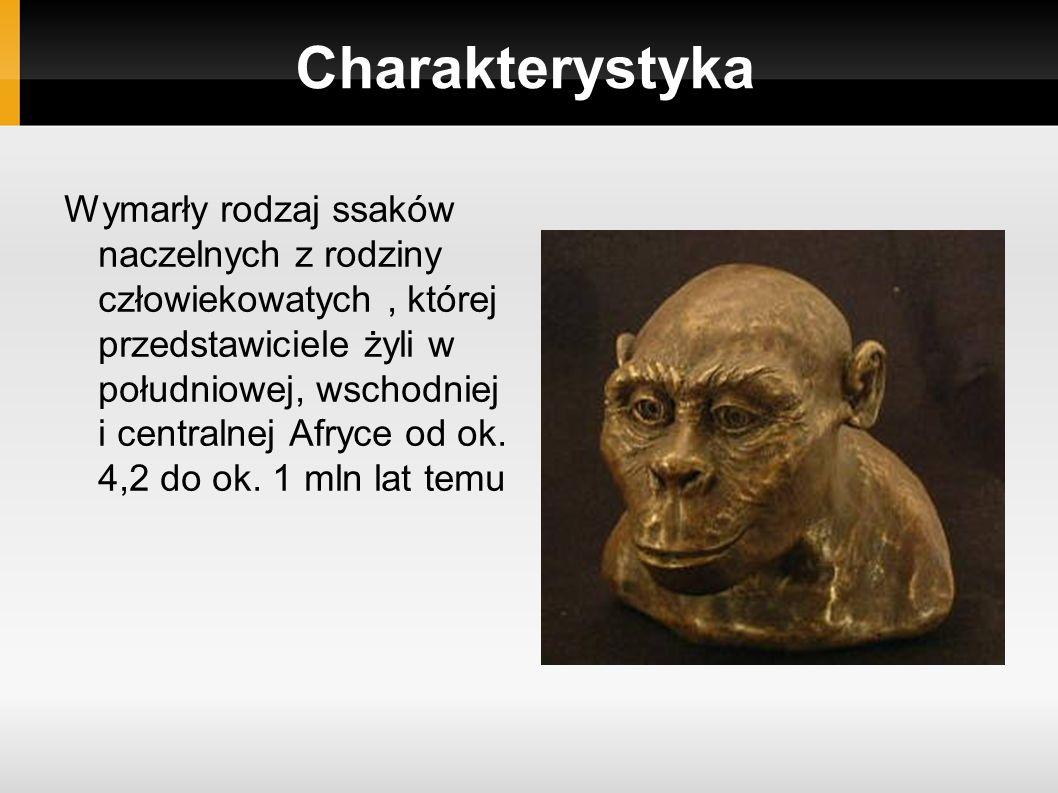 Charakterystyka Wymarły rodzaj ssaków naczelnych z rodziny człowiekowatych, której przedstawiciele żyli w południowej, wschodniej i centralnej Afryce od ok.