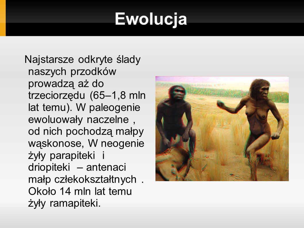 Ewolucja Najstarsze odkryte ślady naszych przodków prowadzą aż do trzeciorzędu (65–1,8 mln lat temu).