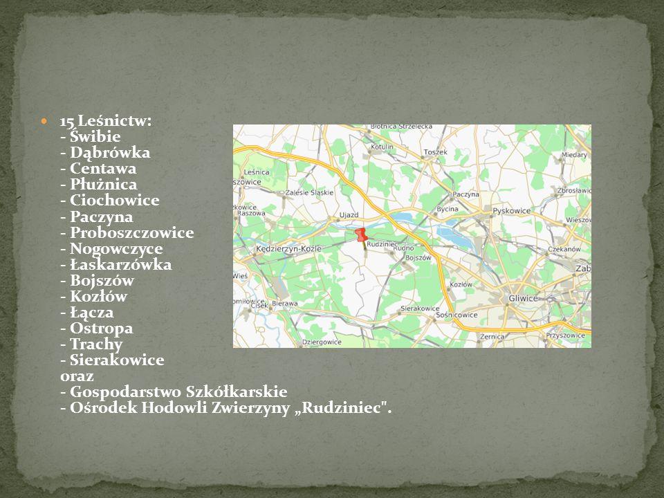 """15 Leśnictw: - Świbie - Dąbrówka - Centawa - Płużnica - Ciochowice - Paczyna - Proboszczowice - Nogowczyce - Łaskarzówka - Bojszów - Kozłów - Łącza - Ostropa - Trachy - Sierakowice oraz - Gospodarstwo Szkółkarskie - Ośrodek Hodowli Zwierzyny """"Rudziniec ."""