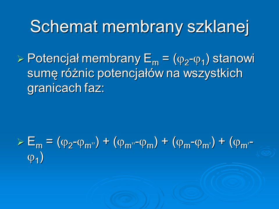 Schemat membrany szklanej  Potencjał membrany E m = (  2 -  1 ) stanowi sumę różnic potencjałów na wszystkich granicach faz:  E m = (  2 -  m'' ) + (  m'' -  m ) + (  m -  m' ) + (  m' -  1 )