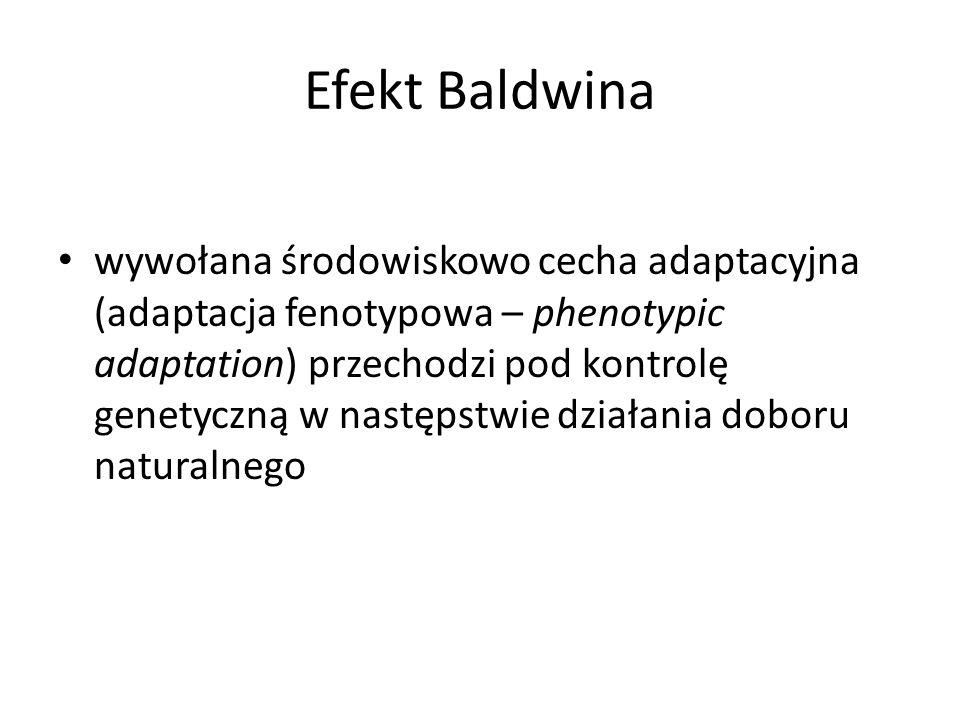 Efekt Baldwina wywołana środowiskowo cecha adaptacyjna (adaptacja fenotypowa – phenotypic adaptation) przechodzi pod kontrolę genetyczną w następstwie działania doboru naturalnego