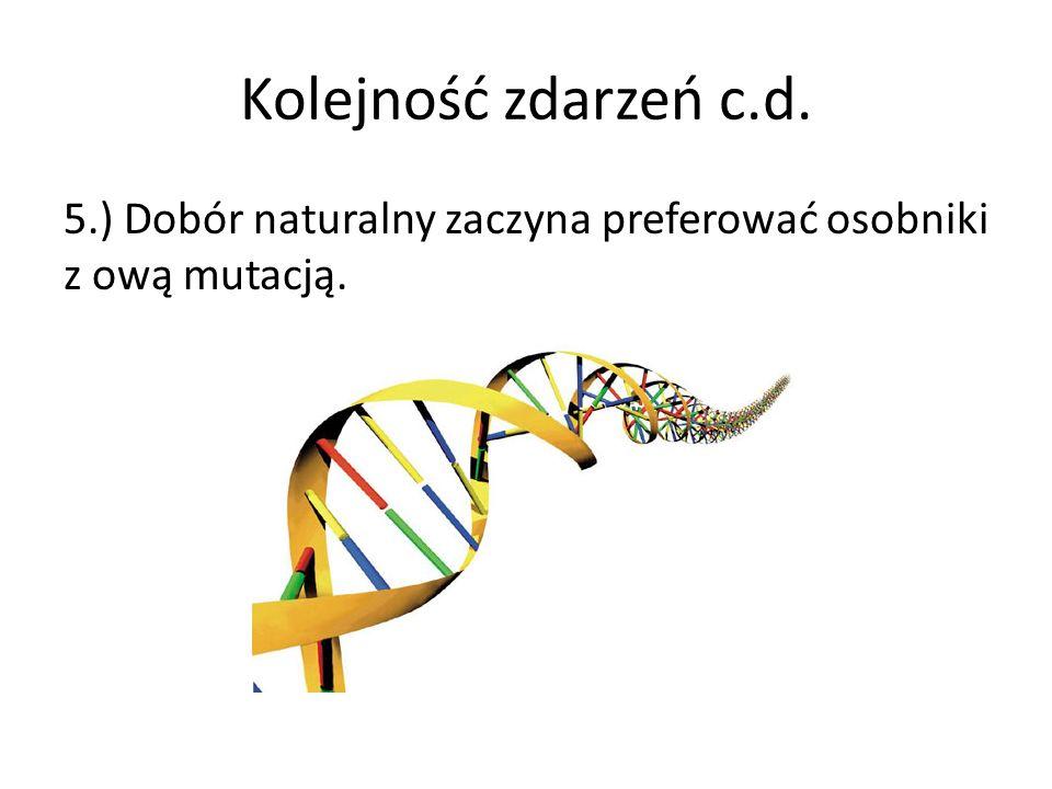 Kolejność zdarzeń c.d. 5.) Dobór naturalny zaczyna preferować osobniki z ową mutacją.