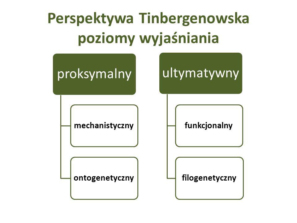 Perspektywa Tinbergenowska poziomy wyjaśniania proksymalny mechanistycznyontogenetyczny ultymatywny funkcjonalnyfilogenetyczny