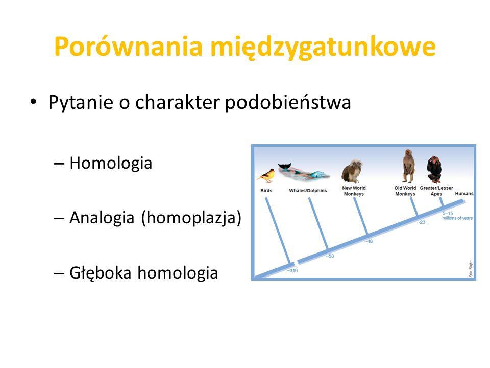 Porównania międzygatunkowe Pytanie o charakter podobieństwa – Homologia – Analogia (homoplazja) – Głęboka homologia